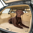 Picture of Dog Car Security