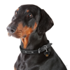 Picture of DOBERMANN