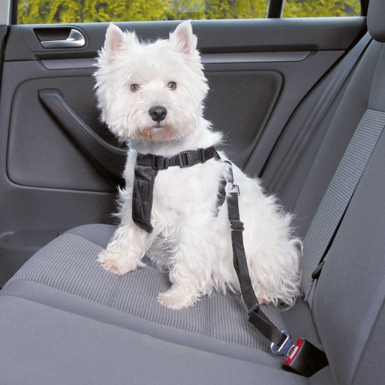 Picture of Dog Car Harness XS