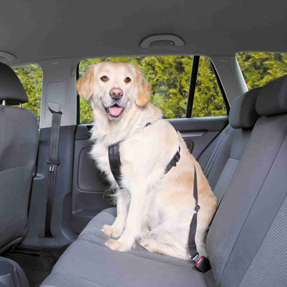 Picture of Dog Car Harness L