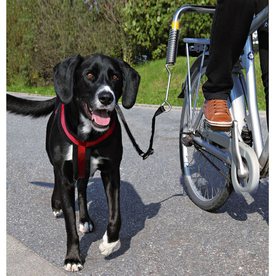 Picture of Biker-Set for large dogs