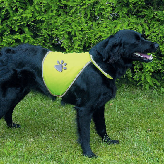 Picture of Safty vest for dogs L