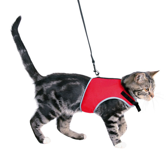 Picture of Soft harness with leash for cats 1.20 m